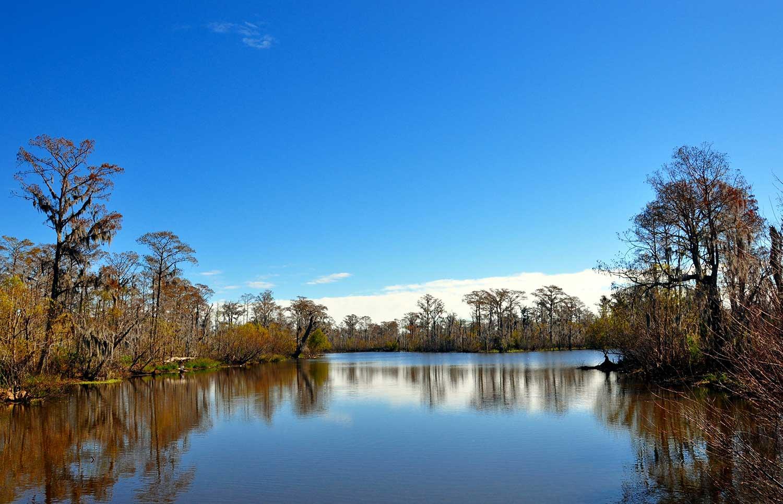 gallery-swamp